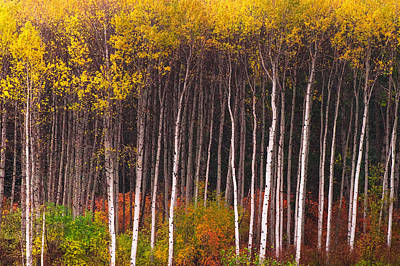 Photograph - Shades Of Autumn by Crystal Hoeveler