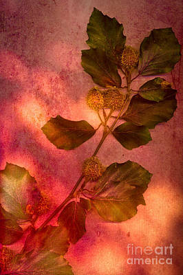 Scanography Photograph - Shades Of Autumn by Jan Bickerton