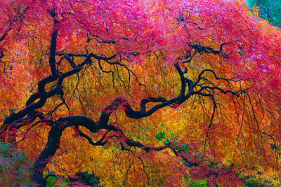Shades Of Autumn Art Print by Patricia Babbitt