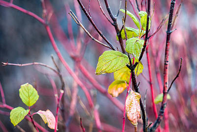 Shades Of Autumn - Reds And Greens Art Print by Alexander Senin