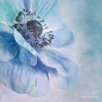 Anemone Photograph - Shades Of Blue by Priska Wettstein