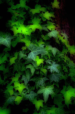 Shades Of Green Art Print