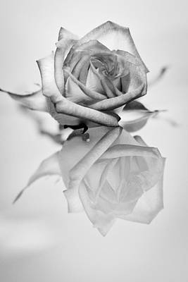 Photograph - Shades Of Grey by Elvira Pinkhas