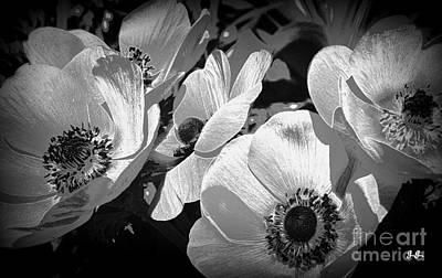 Photograph - Shades Of Grey by Geri Glavis