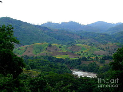 Photograph - Shades Of Honduran Green by Lew Davis