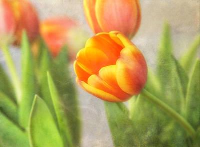 Shades Of Spring Art Print