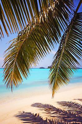 Photograph - Shades Of Tropics by Jenny Rainbow