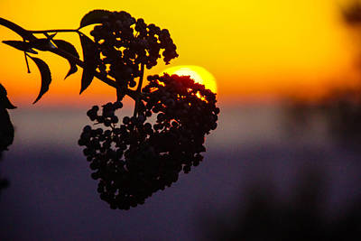 Photograph - Shadow Berry Sunset by Michael Courtney