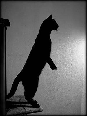Photograph - Shadow Cat by Saki Art