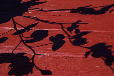 Photograph - Shadow Dancer by Julie Andel