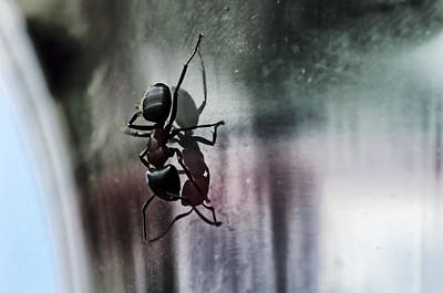 Ant Wall Art - Photograph - Shadow Dancing by Susan Capuano