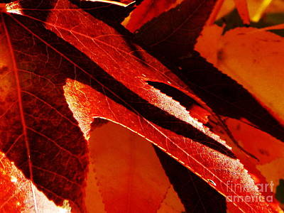 Photograph - Shadow by Diane Miller
