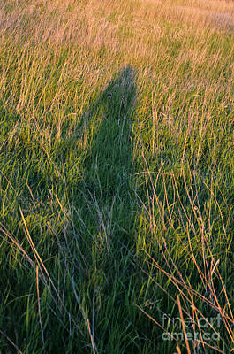 Photograph - Shadow In The Grass by Jill Battaglia