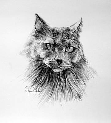 Drawing - Shadow by James Skiles
