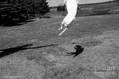 Photograph - Shadow Jumper by Susan Herber