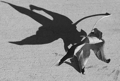 Photograph - Shadow by Kume Bryant