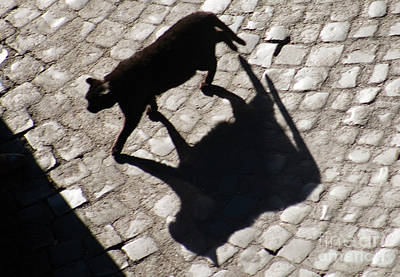 Photograph - Shadow Of A Black Cat by Tim Holt