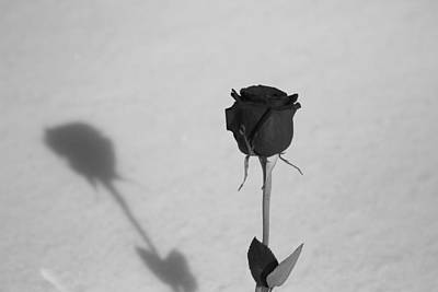Black And White Photograph - Shadow Of A Rose by Dan Sproul