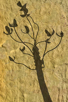 Photograph - Shadow Of The Triffids by Paul Wear