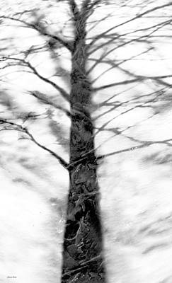 Photograph - Shadow Of Winter by Shawna Rowe