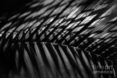 Photograph - Shadow On Palm Frond by Alexander Kunz