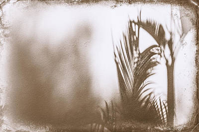 Photograph - Shadow On The Wall by Carolyn Marshall