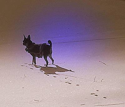 Photograph - Shadow by Pamela Hyde Wilson