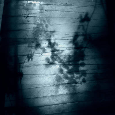 Photograph - Shadow Play by Louise Kumpf