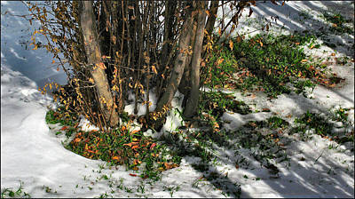 Photograph - Shadowplantsnowcomp 2009 by Glenn Bautista