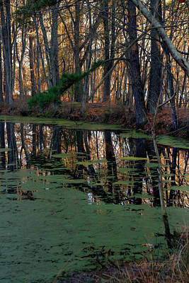 Photograph - Shadows And Reflections by Paulette B Wright