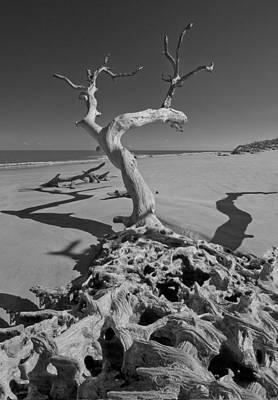 Shadows At Driftwood Beach Art Print by Debra and Dave Vanderlaan