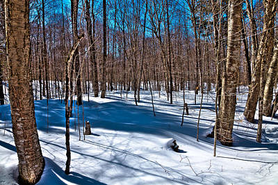 Shadows In The Snow On Rondaxe Road Art Print by David Patterson