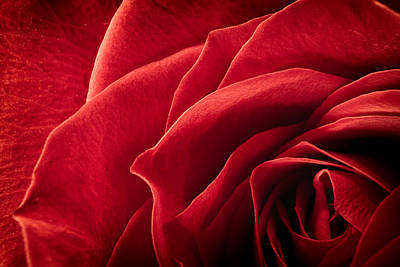Photograph - Shadows Of A Red Rose by Jeff Sinon