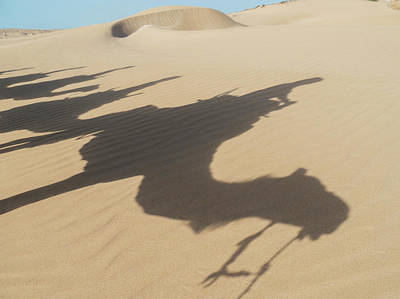 Moroccan Photograph - Shadows Of Camels And Tourists by Charles Bowman