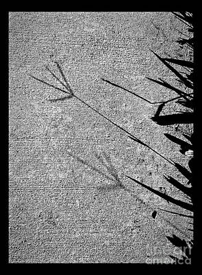 Photograph - Shadows Of Lives No. 19 by Fei Alexander