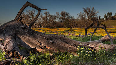 Photograph - Shadows Of Spring by Tim Bryan