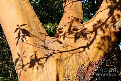 Photograph - Shadows On Arbutus by Sharron Cuthbertson