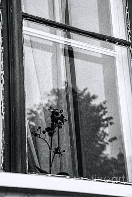 Photograph - Shadows On Glass by Rick Bragan