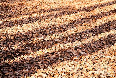 Shadows On The Leafy Forest Floor Art Print
