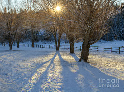 Photograph - Shadows On The Snow by Idaho Scenic Images Linda Lantzy