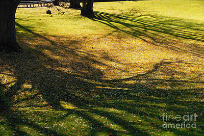 Photograph - Shadows Shifting by Linda Shafer
