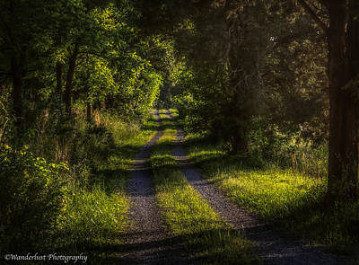 Photograph - Shady Country Lane by Paul Herrmann