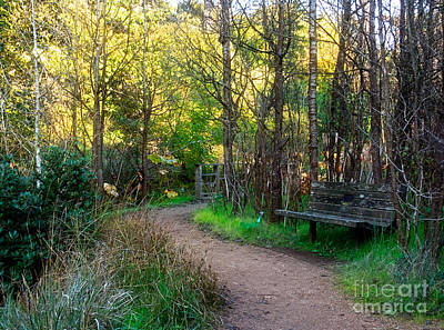 Art Print featuring the photograph Shady Dell by Kate Brown
