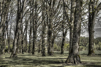 Photograph - Shady Grove by Jean Noren