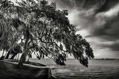 Overcast Photograph - Shady Oak by Marvin Spates