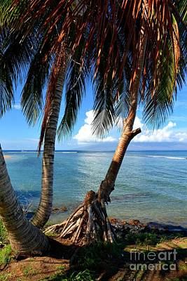 Photograph - Shady Palm Beach by Patrick Witz