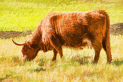 Shaggy Scottish Highlander Art Print