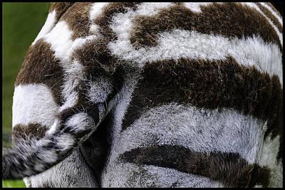 Photograph - Shake It Up Zebra Butt by LeeAnn McLaneGoetz McLaneGoetzStudioLLCcom