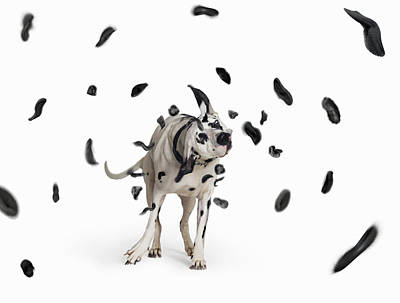 Dog Photograph - Shake The Spots Off by Gandee Vasan