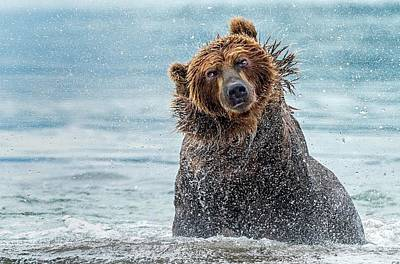 Brown Bear Photograph - Shaking - Kamchatka, Russia by Giuseppe D\\\'amico